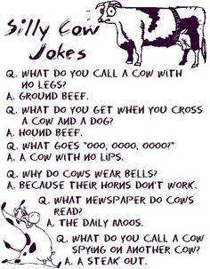 I'm having a cow