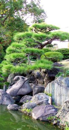 e-learning platform - Study tour in Japan - Japanese pruning and gardens - Frederique DUMAS - www.japanese-garden-institute.com