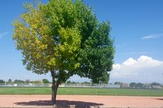Saw this tree that had 3 different shades of green. http://ift.tt/2bRqP5d