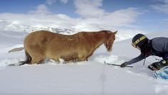 Snowboarders Save Stranded Horse From Freezing To Death Thank the Lord these compassionate snowboarders came along in time to save this lost, stranded horse from freezing to death! I can't stand to think about it. Let's hear it for these heroes!