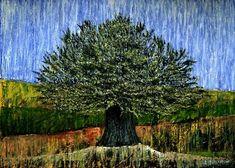 Landscape Olive Tree
