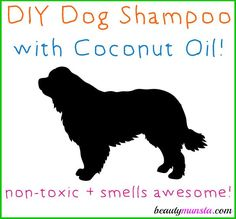 Beautymunsta.com brings to you a simple DIY coconut oil shampoo for dogs that is safe, non-toxic and great for your dog's fur and skin. Has your dog been experiencing hair fall lately? Store-bought shampoo could be the culprit! If you love your dog, but hate the stink, you need to DIY your own aromatic shampoo …