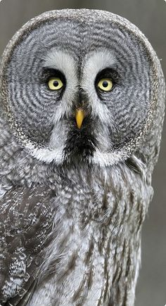 Great Grey Owl lately, I just love owls, but I haven't found the owl that I want. Maybe I will have to make it somehow.