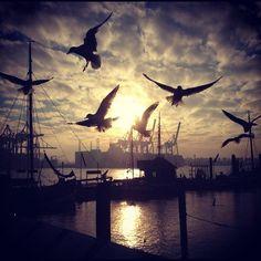 #Hamburg #EuropaPassage #EuropaPassageHamburg                                                                                                                                                                                 Mehr