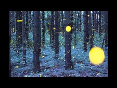 The Firefly Time-Lapse