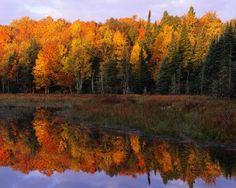 Autumn Foliage Along a Calm Lake Watersmeet, Michigan, USA