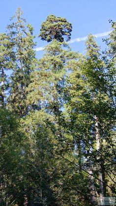 - Check more at https://www.miles-around.de/nordamerika/usa/washington/olympic-national-park/,  #Nationalpark #Natur #Regenwald #Reisebericht #Seattle #Tiere #USA #Washington
