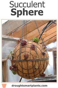 Succulent Sphere - charming and interesting garden focal point. Unique Gardens, Amazing Gardens, Garden Spheres, Overwintering, Succulents In Containers, Garden Crafts, Air Plants, Grapevine Wreath, Grape Vines