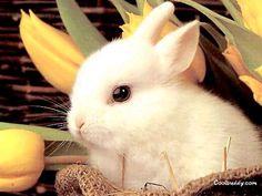 En la otra vida seré un conejo