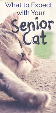 If your cat is over the age of 7 years, he's considered a senior cat. Here are a…