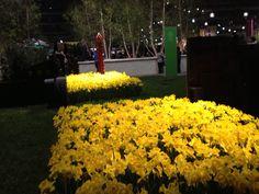 Philadelphia flower show2013
