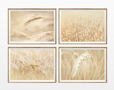 SET of 4 (UNFRAMED) Rye Field Wall Art 8x12 Prints . country rustic landscape nature photography. rustic wall art. landscape wall decor