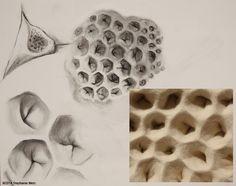 Stephanie Metz, Large Flesh & Bone Sketch: Honeycomb shape, Charcoal on Paper