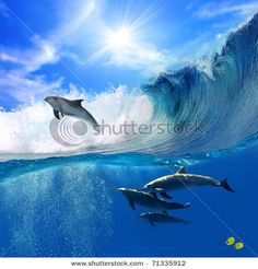 dolphins are so cute and graceful <3<3<3<3