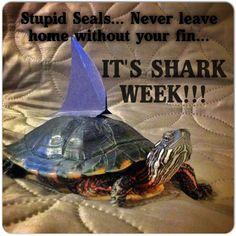 It's SHARK WEEK!!