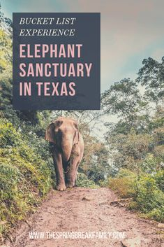 One of a Kind Trip: An Elephant Sanctuary in Texas - - Did you know you could make your bucket list dream of caring for elephants come true at an elephant sanctuary right here in Texas? Texas Vacations, Vacation Places, Dream Vacations, Places To Travel, Texas Getaways, Vacation Destinations, Time Travel, Texas Travel, Travel Usa