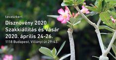 Dísznövény Szakkiállítás és Vásár 2020. Tavaszkert a Budai Arborétumban Budapest, Plants, Plant, Planets