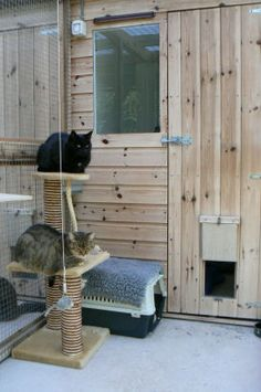 137 best cattery images  cattery cat room cat enclosure