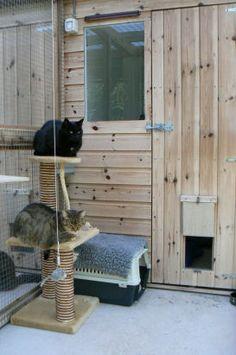 10 Truthful Tips: Cat Girl Kawaii cat aesthetic teal. Ugly Cat, Cat Stands, Munchkin Cat, Cat Pose, Cat Enclosure, Cat Aesthetic, Kawaii Cat, Cattery, Cat Behavior