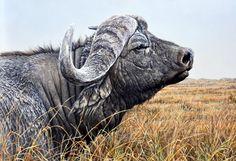Alan M Hunt ~ Wildlife Artist ~ Winner BBC Wildlife Artist of the Year 2010 - Totem Talk
