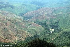 """Brazil has reduced deforestation rates in the Amazon region by 70%, for example, keeping 3.2 billion tons of carbon dioxide out of the atmosphere since 2005 and elevating this nation to global leadership in climate change solutions. In a recent Op-Ed (""""To Save the Planet, Don't Plant Trees"""", New York Times, September 20), Assistant Professor Nadine Unger of Yale School of Forestry & Environmental Studies"""