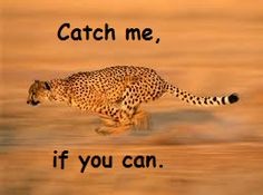 Catch me, if you can.