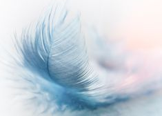 Feather Ease Slightlywhite feather in close up photography, Bokeh, Canon Eos, Free Pictures, Free Images, Pictures Images, Nature Pictures, Magical Pictures, Feather Meaning, Photo Café