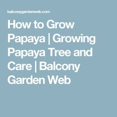 How to Grow Papaya | Growing Papaya Tree and Care | Balcony Garden Web