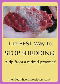 Stop Shedding ~ Sick of Pet Hair? ~ http://mendedwheels.wordpress.com/2014/03/21/sick-of-pet-hair-i-guarantee-this-stops-shedding/