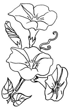 morning glory flower coloring pages Flower Coloring Pages, Colouring Pages, Coloring Books, Embroidery Patterns, Hand Embroidery, Morning Glory Flowers, Volubilis, Fabric Painting, Rock Art