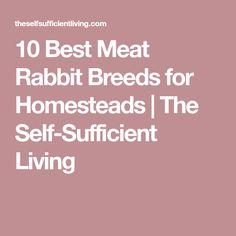 10 Best Meat Rabbit Breeds for Homesteads | The Self-Sufficient Living