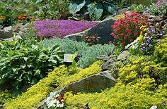 modern rock garden plant colorful