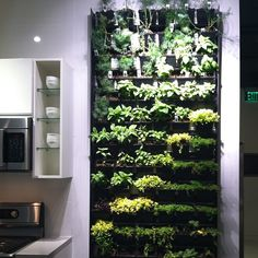 need this floor to ceiling herb garden in my life... If I could keep them alive. #ultimatekitchen