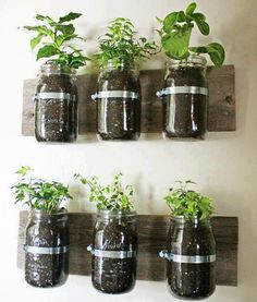 Mason Jar Wall Planter {mason jar} ~ Learn how to create an adorable indoor or outdoor wall planter. These jars would look so cute on a kitchen wall filled with herbs! You can make your own wall planter by using mason jars, an old board, and pipe clamps. Pot Mason Diy, Mason Jar Herbs, Mason Jar Herb Garden, Mason Jar Planter, Herbs Garden, Pots Mason, Garden Terrarium, Plants In Mason Jars, Tea Herbs