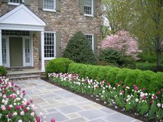 Leydon Landscaping Inc in Buckingham Pennsylvania- Beautiful Tulips and Bluestone Walkway