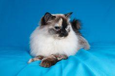 A Zwollywood Cat Cats, Animals, Gatos, Animales, Animaux, Animal, Cat, Animais, Kitty