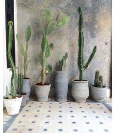 Balcony pots, succulents and concrete.