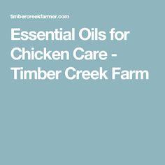 Essential Oils for Chicken Care - Timber Creek Farm