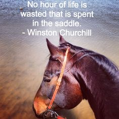 Horse Quotes www.CV-Coaching.nl #horselover Because there is no substitute for good practice with horses.