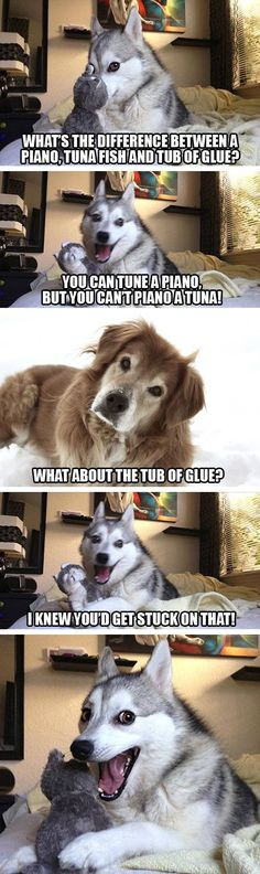 Pun Dog (AKA Pun Husky) is an adorable Alaskan Klee Kai dog who has already stolen our hearts with dad jokes and sass. Here's the best of the meme so far.