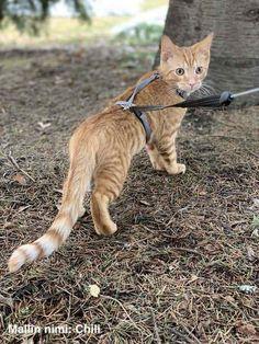 Parhaat kissan valjaat kevääksi 2019 Cats, Animals, Gatos, Animales, Animaux, Animal, Cat, Animais, Kitty