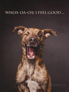 Playful Dog Portraits By Elke Vogelsang - I feel good...