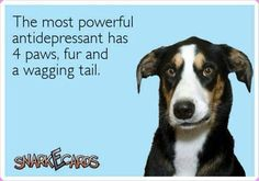 The most powerful antidepressant has 4 paws, fur, and a wagging tail. #doglove #mansbestfriend