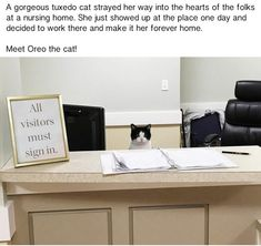 Stray Cat Wanders Into A Nursing Home And Decides To Work There...