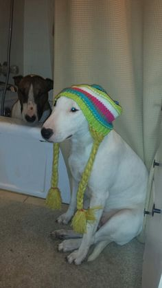 Awe! What a funny Bull Terrier. And the second one hiding in the background! Too cute! :)