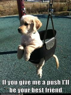 If you give me a push I'll be your best friend