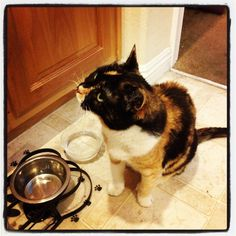 Selby waiting while her dinner is prepared.