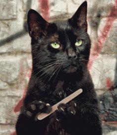 Razones por las que Salem de Sabrina la bruja adolescente era el mejor!! - Imagen 22