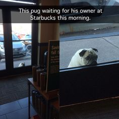 Pictures of sad pugs + the internet = not a good mix. Especially when that sad pug is pictured absolutely longing for his owner outside of a Starbucks. Cute Funny Animals, Funny Dogs, Pug Kawaii, Best Funny Pictures, Funny Photos, Dog Pictures, Pug Cross, Pugs And Kisses, Waiting For Him