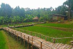 Daradalay Banndin Organic Farm, ChiangMai Landscape Model, Landscape Edging, Green Landscape, Driveway Landscaping, Country Landscaping, Walkway, Thai House, House In Nature, Ireland Landscape